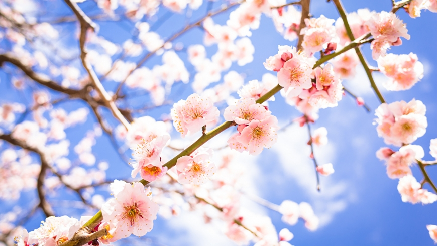 Frühlingserwachen März 2017