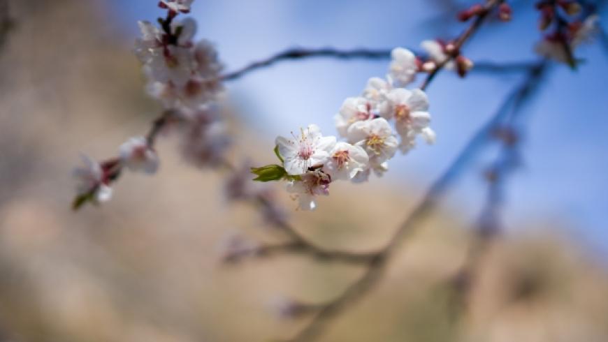 Dem Frühling entgegen …