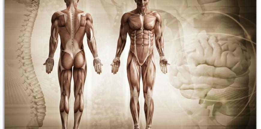 Anatomie Intensiv-Modul Fokus Becken 07./08.11.2020