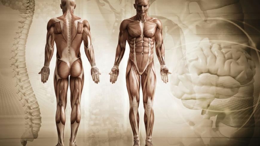Anatomie Intensiv-Modul Fokus Becken